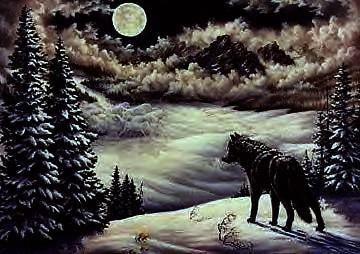 mxcs2ocj dans fond ecran loup